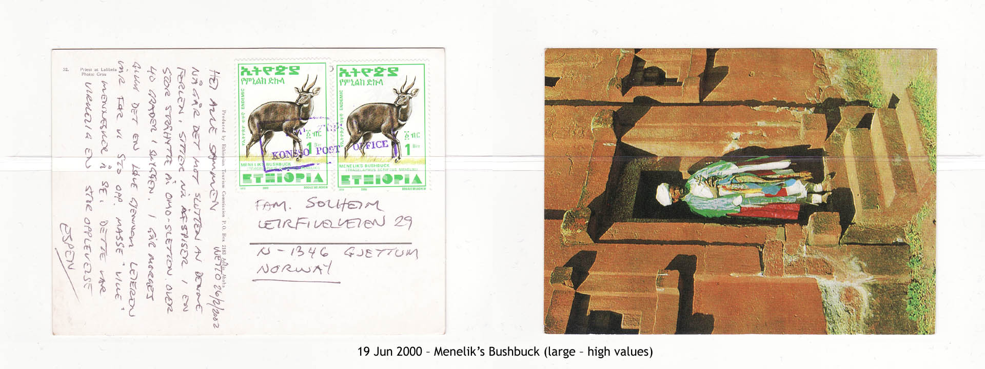 20000619 – Menelik's Bushbuck (large – high values)