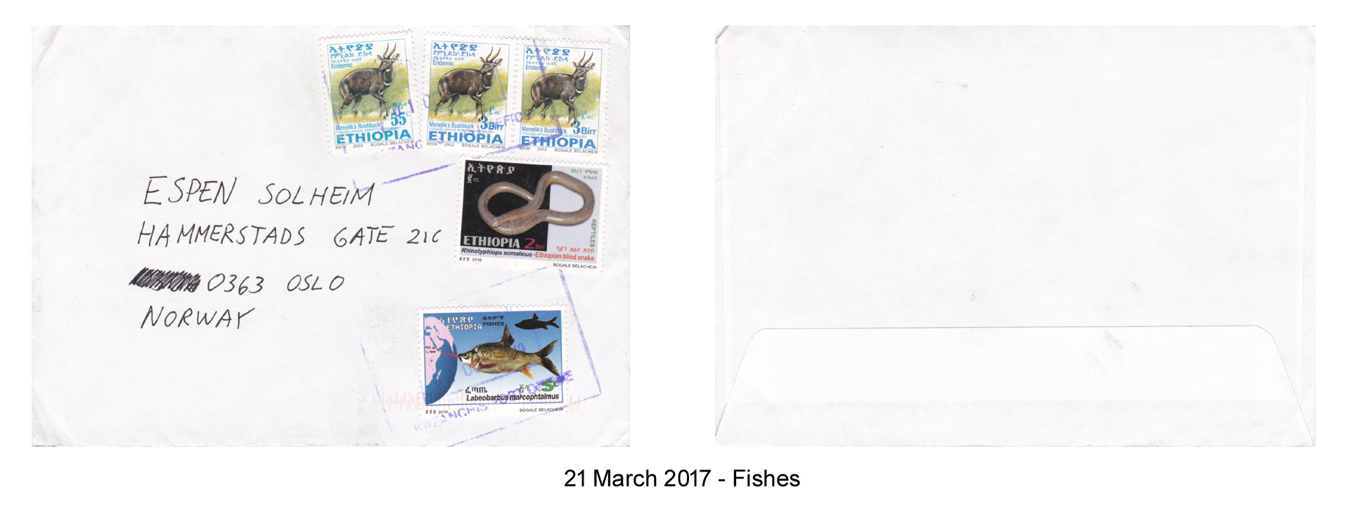 20170321 - Fishes